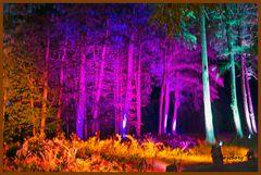 Schloß Dyck - Parkleuchten - Beleuchtete Bäume
