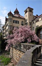 .............:::::::::::::::::. Schloss Waldenburg/Sachsen .:::::::::::::::::::.............