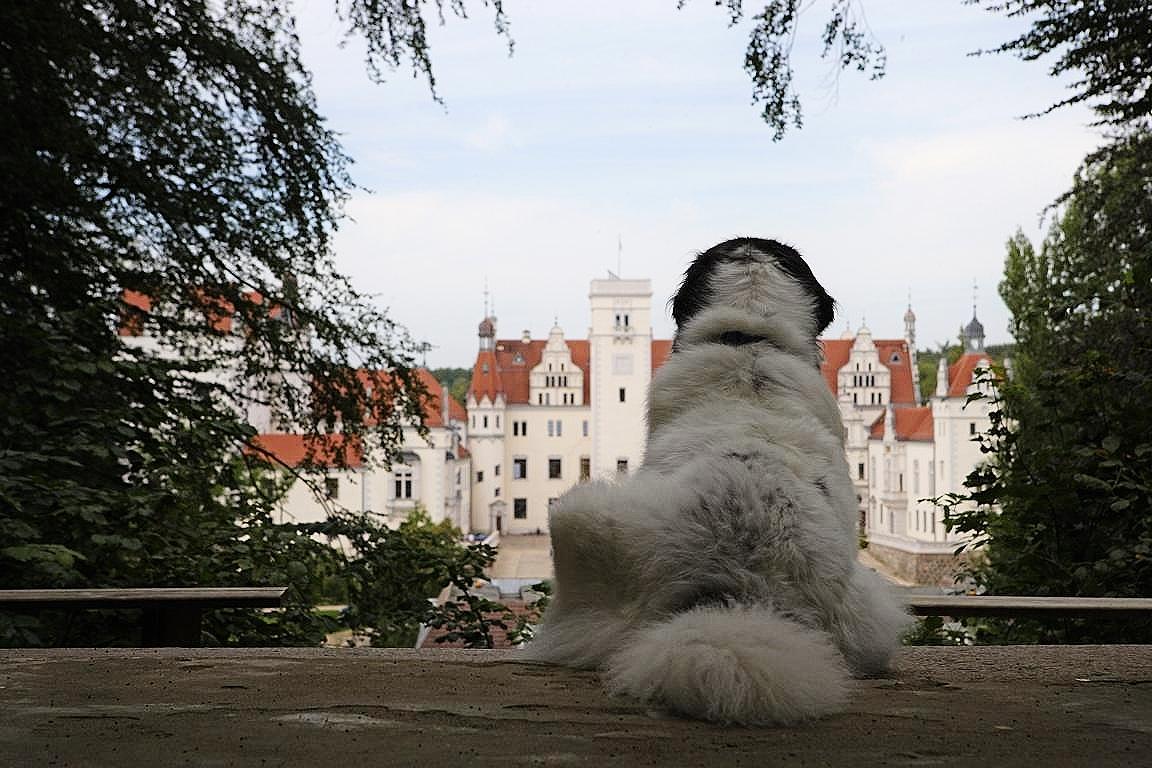 Schlosshund