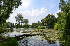 Schlosspark Dennenlohe - Nr. 9
