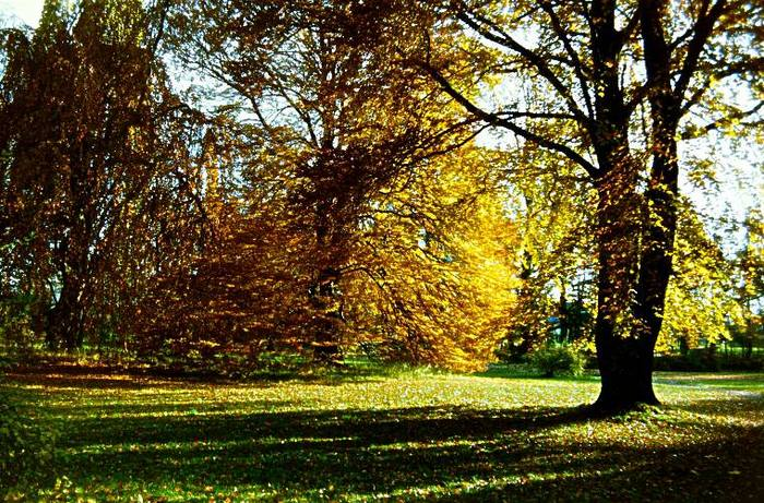 Schlosspark im Herbst