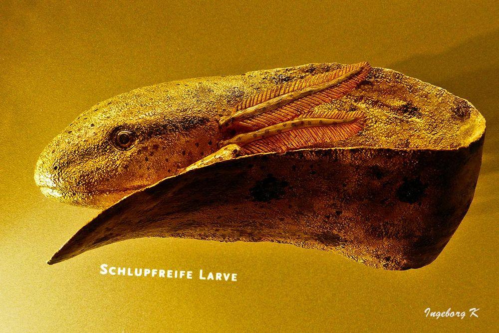 Schlupfreife Larve - Aquazoo Düsseldorf