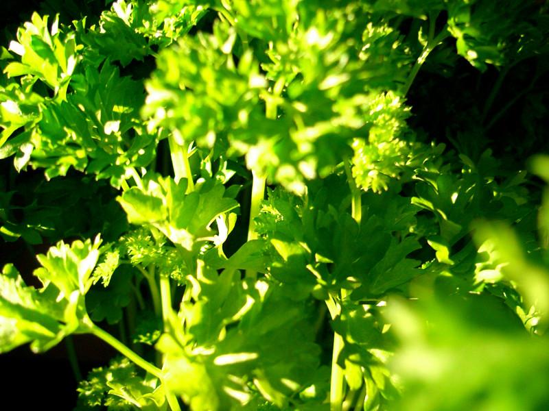 Schmackhaftes Grün
