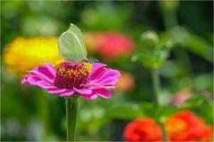 Schmetterligspaziergang