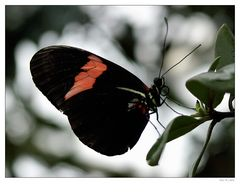 Schmetterling 0903