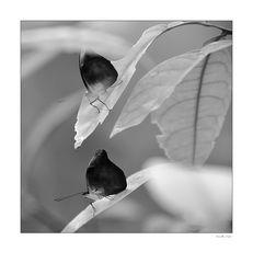 Schmetterling 0908