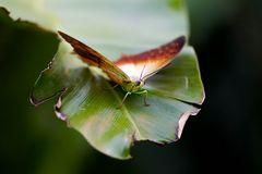 Schmetterling 24