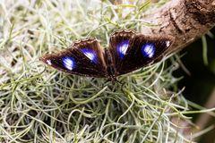Schmetterling 38