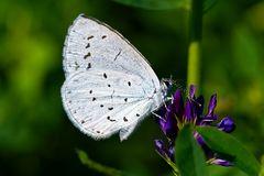 ??? - Schmetterling