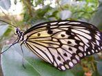 Schmetterling.....