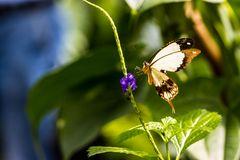 Schmetterling 44