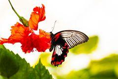 Schmetterling 45