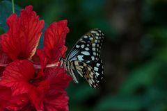 Schmetterling 48