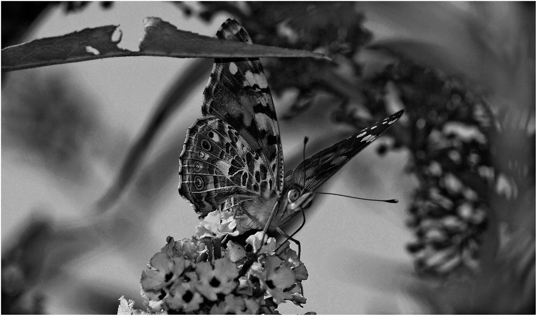 Schmetterling ...