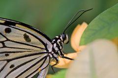 Schmetterling ..