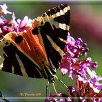 Schmetterling an der Tankstelle