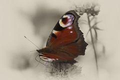 Schmetterling antik
