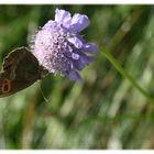 Schmetterling auf 2000 m.ü.M.