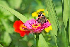 Schmetterling auf Blume 1