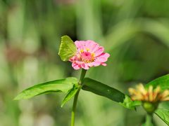 Schmetterling auf Blume 3