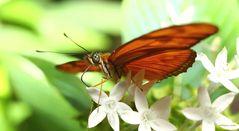Schmetterling auf der Mainau
