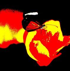 Schmetterling auf gelber Rose als Artefoto