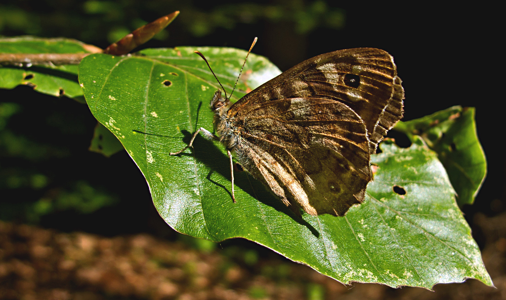 Schmetterling auf grünem Blatt!