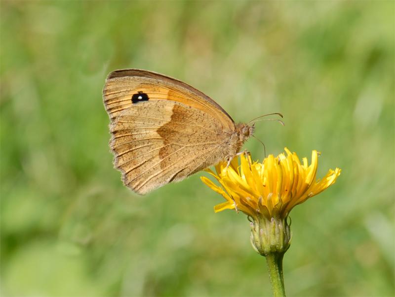 Schmetterlinge Sammeln