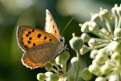 ...........Schmetterling beim Shooting..................