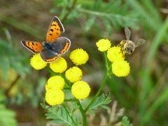Schmetterling + Bienchen