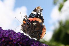 ~Schmetterling~