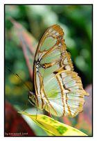 Schmetterling...