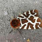 Schmetterling des Jahres 2021