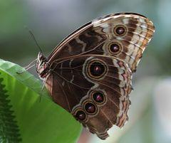Schmetterling du kleines Ding.....