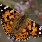Schmetterling - ein Versuch