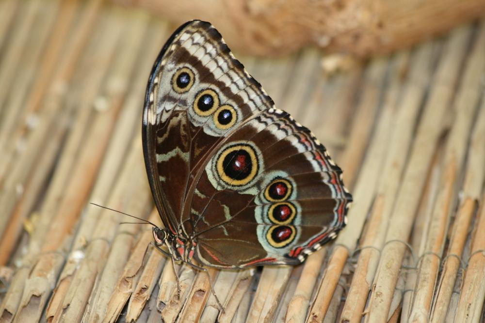 Schmetterling - extra für euch schön gemacht