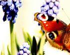 Schmetterling flieg : )