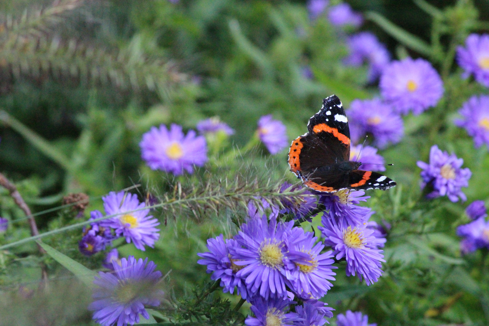 Schmetterling im Herbst