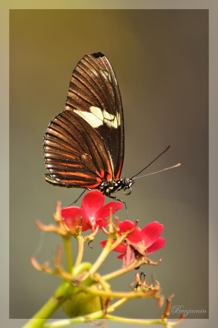 Schmetterling im Manatihaus des Nürnberger Tiergartens