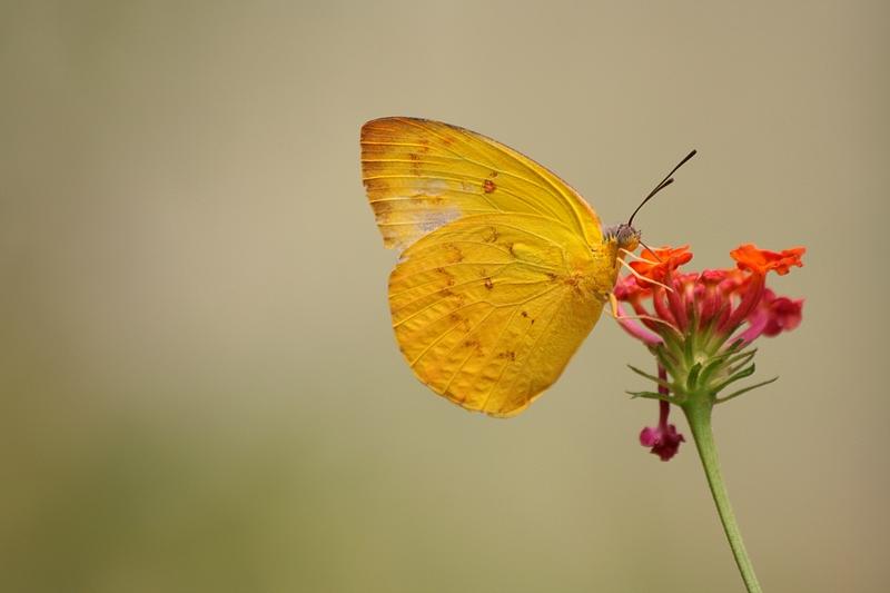 Schmetterling im Norden Thailands
