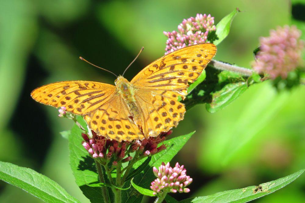 Schmetterling im Reintal