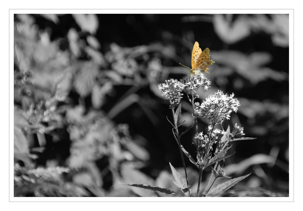 Schmetterling im Siebenmühlental