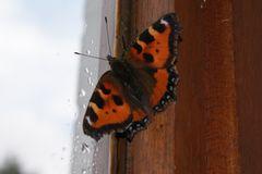 Schmetterling im Zimmer =)