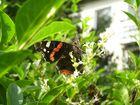 Schmetterling in einer anderen Position