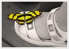 Schmetterling in neuen
