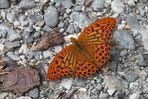 Schmetterling -Kaisermantel- auf Kies