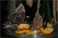 Schmetterling - Mix