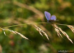 Schmetterling No.1