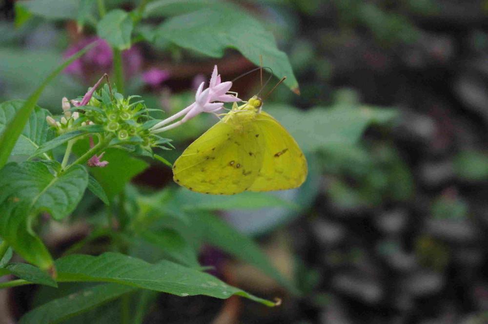Schmetterling - noch mehr davon..