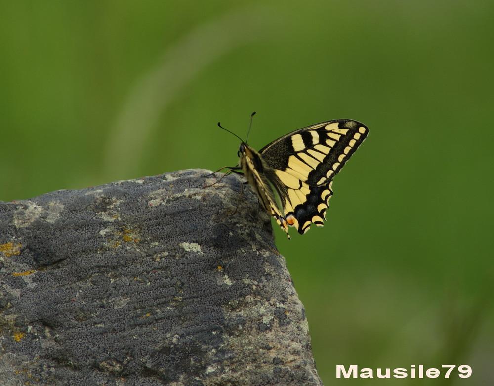 Schmetterling ;o)